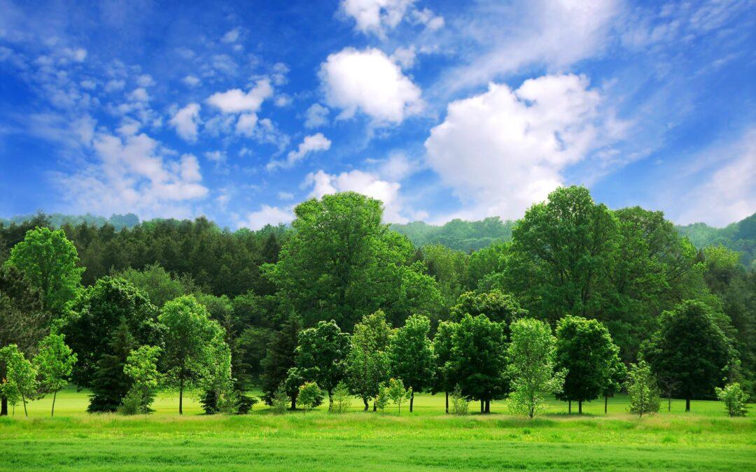 Sostenibilità ambientale: siglato accordo triennale tra l'energy company Global Power Plus e la società benefit Arbolia per la piantumazione di 2000 alberi sul territorio veneto.