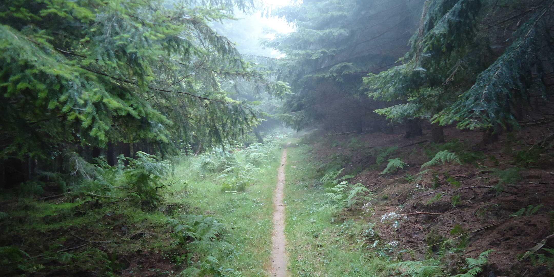 terapia forestale